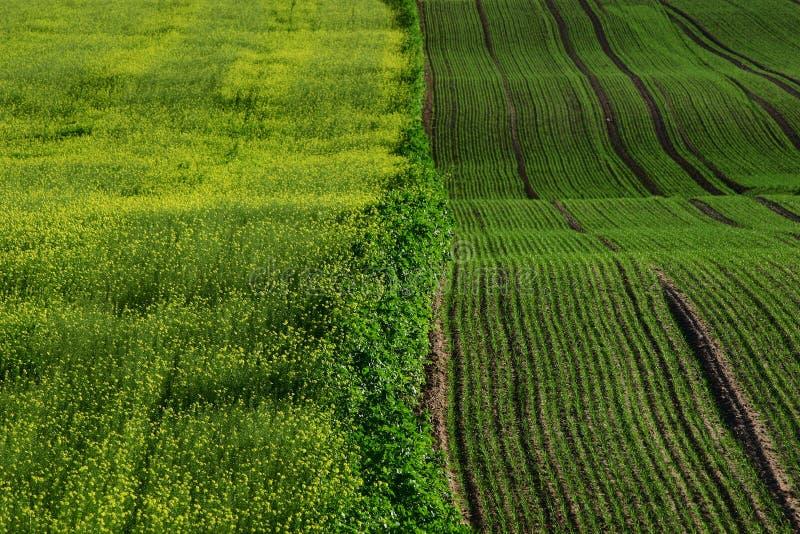 Grüne Felder lizenzfreie stockfotografie