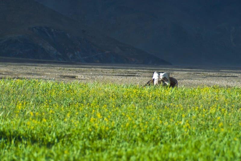 Grüne Felder in der Landschaft lizenzfreies stockfoto