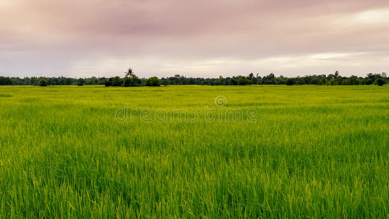 Grüne Felder und Himmel lizenzfreie stockfotos