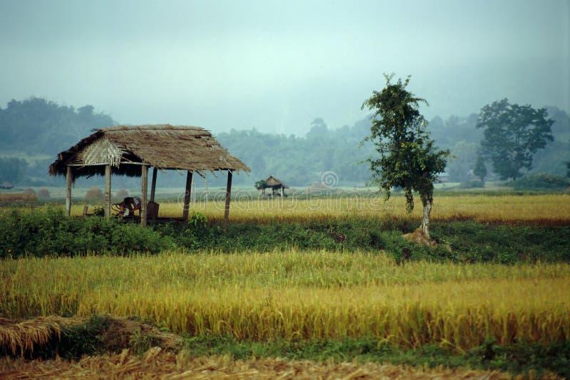Grüne Felder von Hsipaw - Myanmar stockfoto