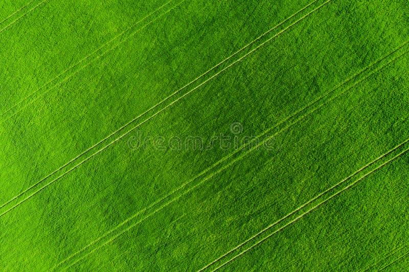 Grüne Feldhintergrundvogelperspektive Landwirtschafts-Wiese von oben Landwirtschaftliche Felder des Sommers stockbild