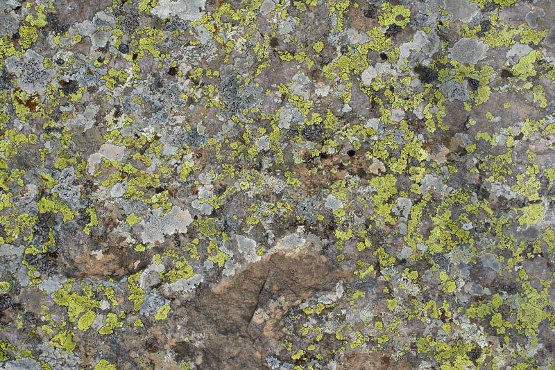Grüne Flechte im Stein stockfotografie
