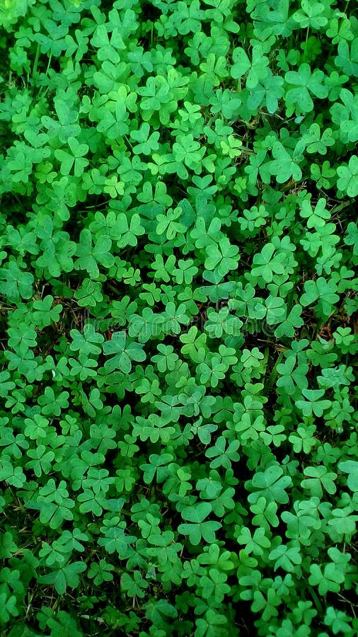 grüne Flora lizenzfreie stockfotografie