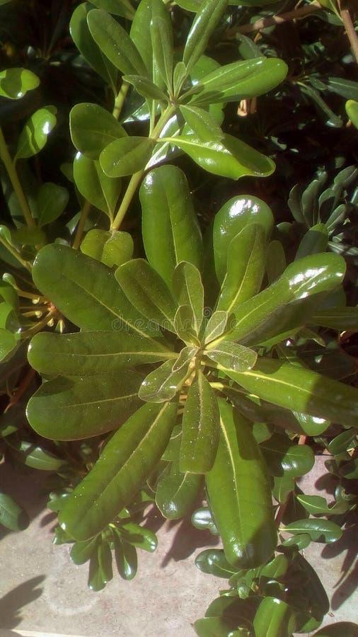 grüne Flora stockfotografie