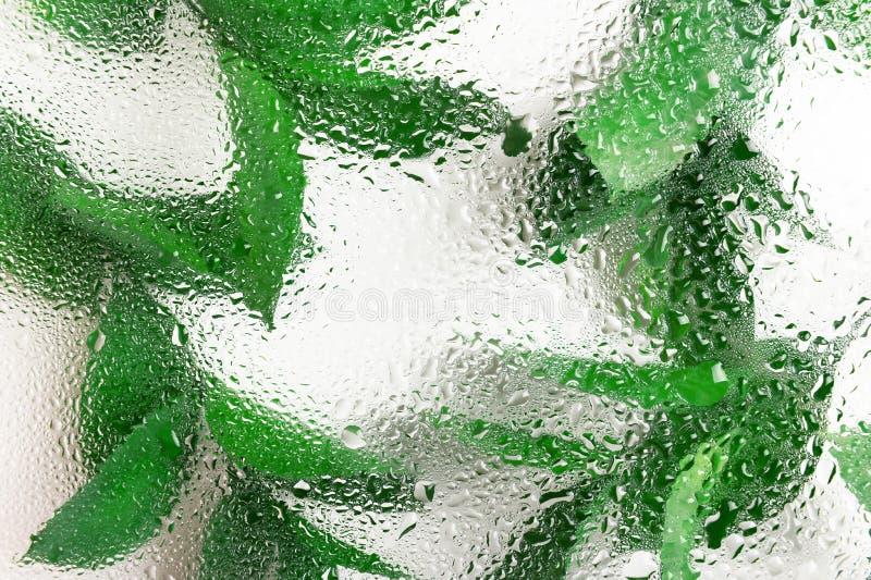 Grüne frische Blätter hinter nassem Glas Organische Teeblätter und Kräuterfrontale Frische, Wassertropfen, Taube auf lizenzfreie stockfotografie