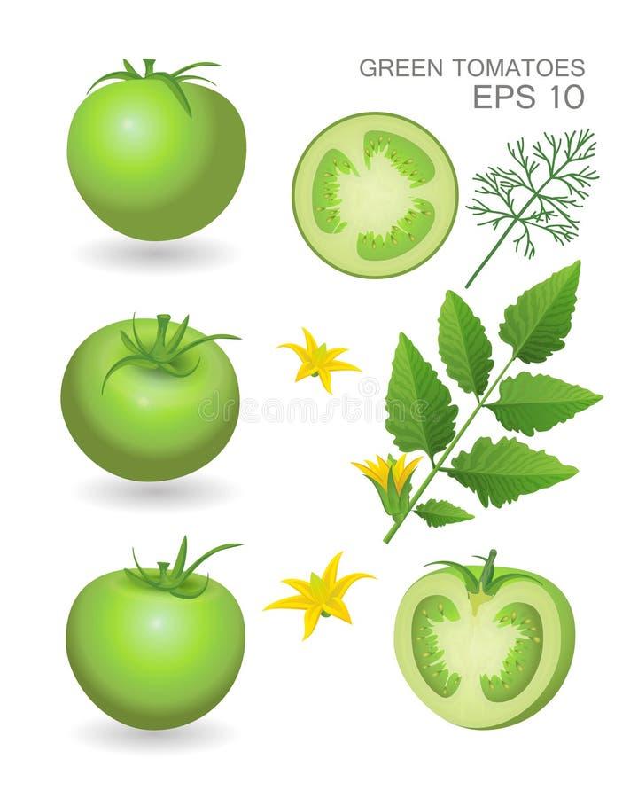 Grüne frische Tomaten stock abbildung