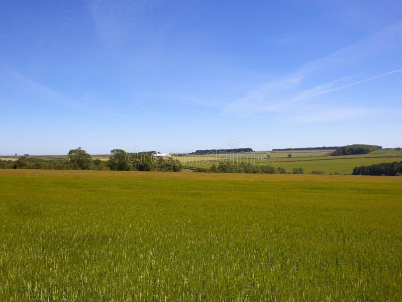 Grüne Gerstenfelder in einem Patchwork, das Landschaft in der Sommerzeit bewirtschaftet stockbild