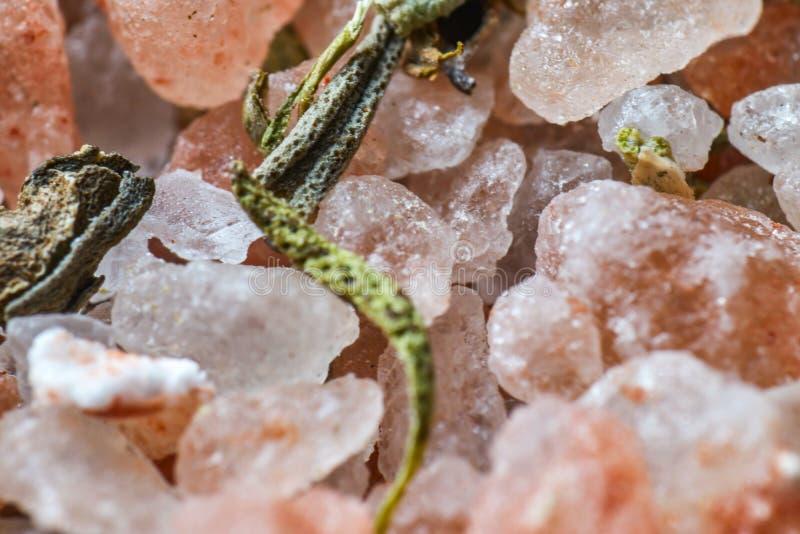 Grüne Gewürze und Salz lizenzfreie stockbilder