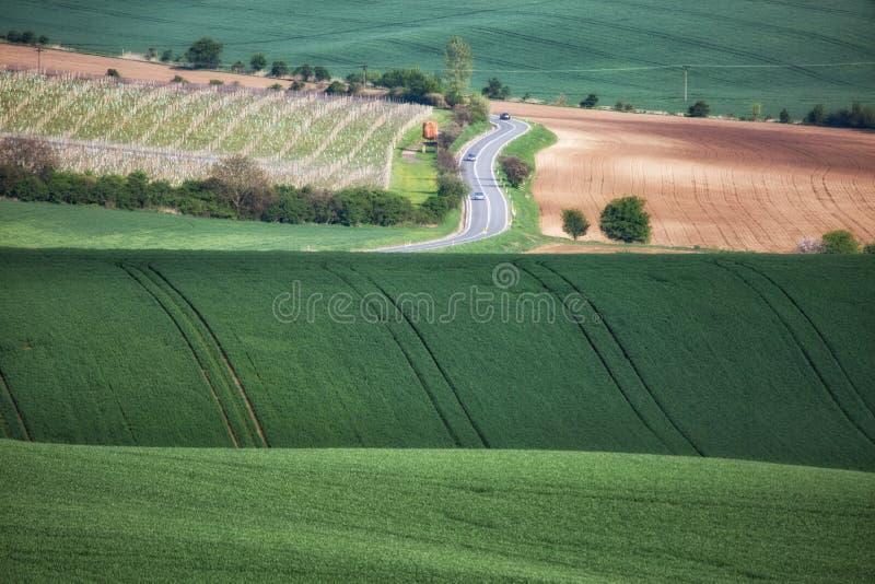 Grüne gewellte Hügel in Süd-Moray, Csezh lizenzfreie stockfotografie