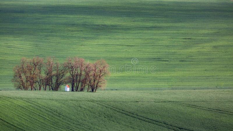 Grüne gewellte Hügel in Süd-Moray, Csezh-Republik stockbilder