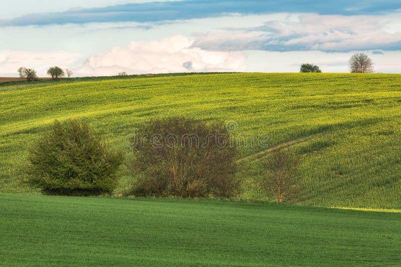 Grüne gewellte Hügel in Süd-Moray, Csezh-Republik lizenzfreies stockfoto