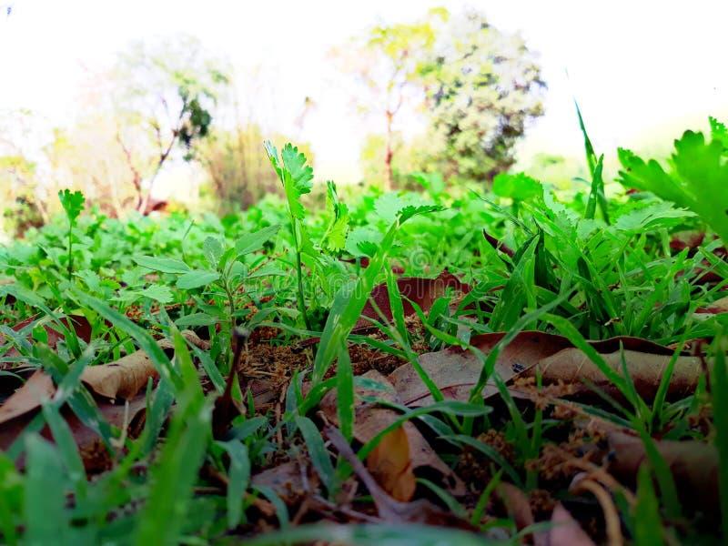 Grüne Graas-Vorrattapeten lizenzfreies stockbild