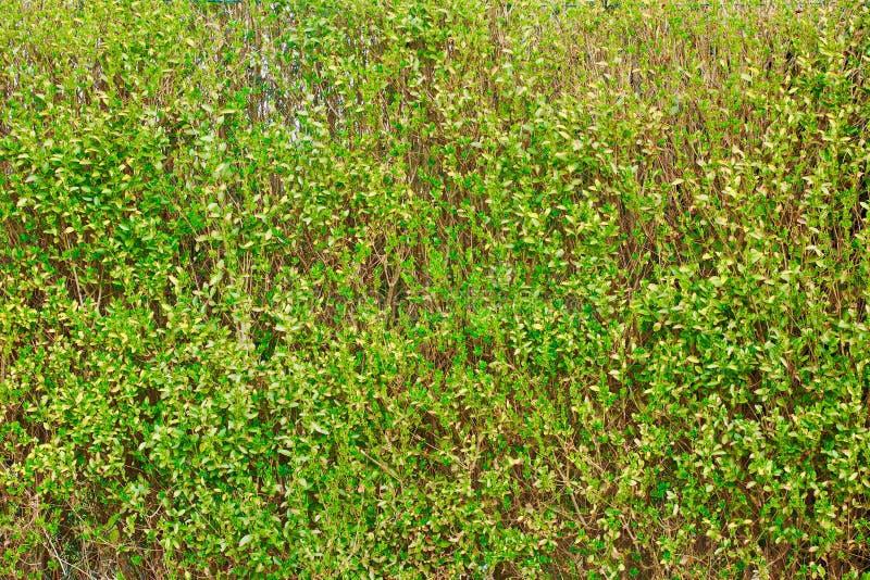 Grüne gras stockbilder