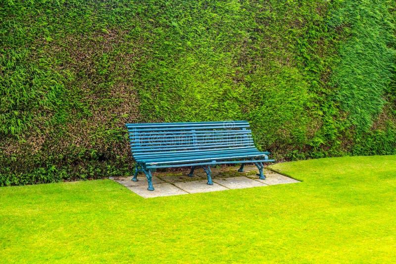 Grüne hölzerne Gartenbank mit grünem Gras lizenzfreie stockfotografie