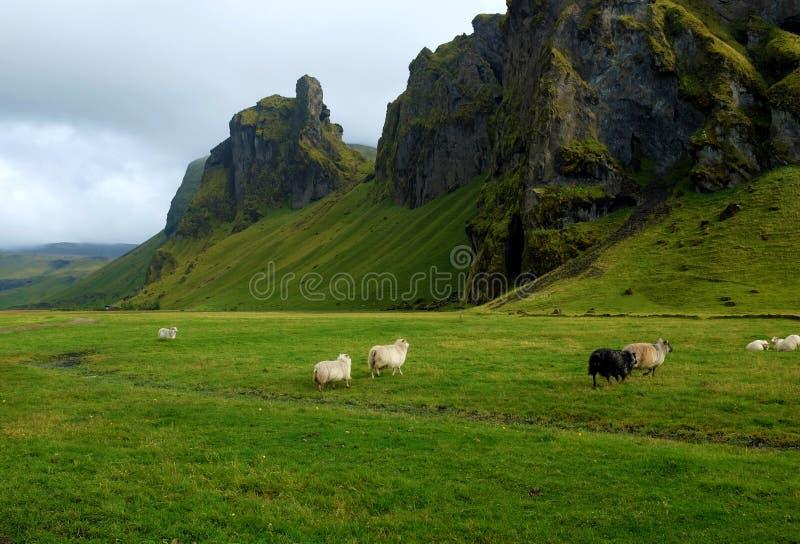 Grüne Hügel lizenzfreies stockbild