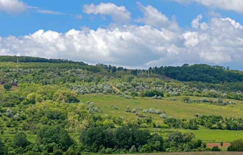Grüne Hügel des Frühsommers, Wolken stockfotos