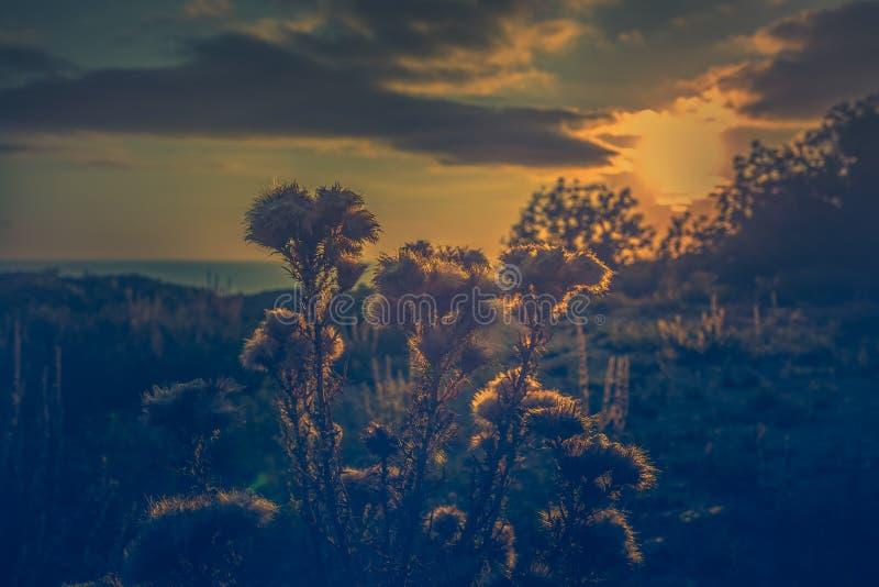 Grüne Hügel, die wilden Feldanlagen und blaues Meer bei Sonnenuntergang Getontes Bild lizenzfreies stockbild