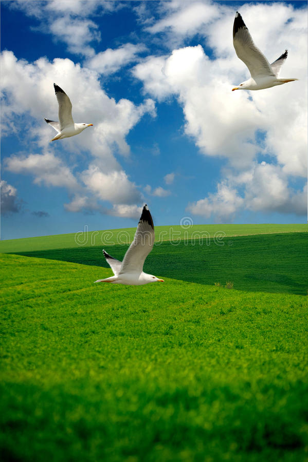 Grüne Hügel mit Seemöwen stockfoto