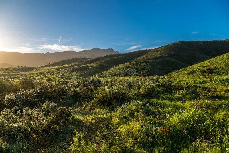 Grüne Hügel nach dem Regen stockbild