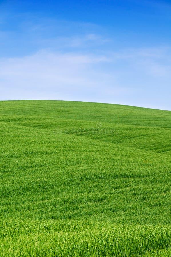 Grüne Hügel und blauer Himmel stockbilder