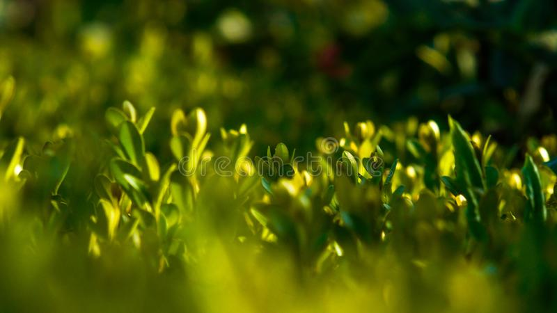 Grüne Hecke stockfoto