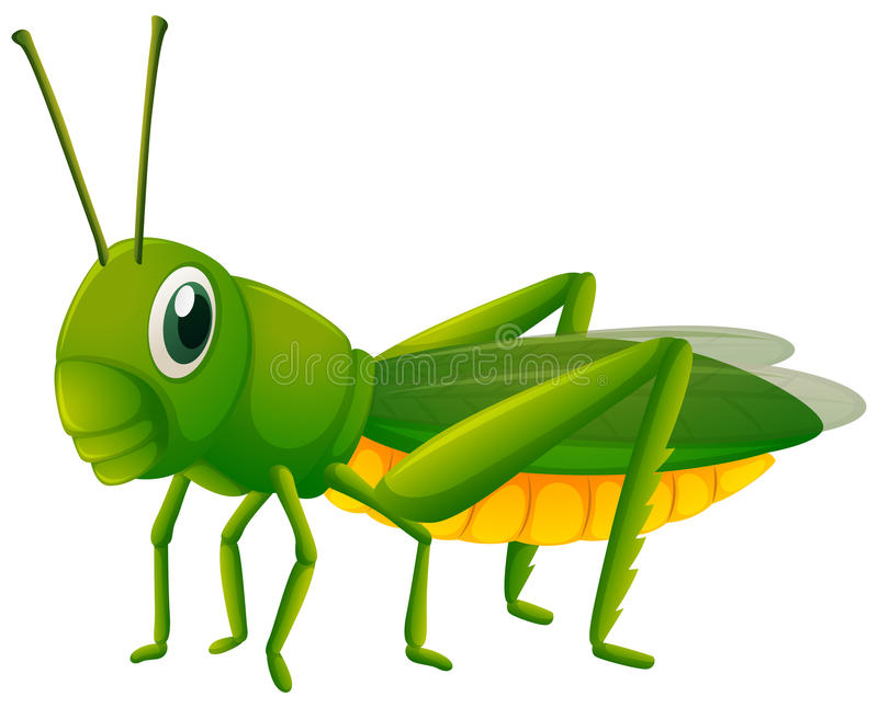 Grüne Heuschrecke auf weißem Hintergrund lizenzfreie abbildung