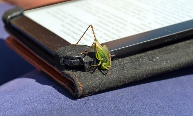 Grüne Heuschreckennahaufnahme auf eBook stockfotografie