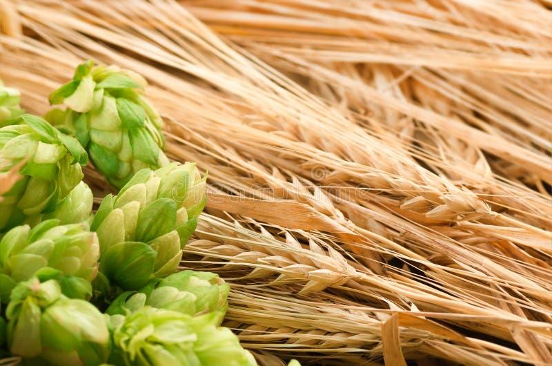 Grüne Hopfen, Malz, Ohren der Gerste und Weizenkorn stockfotos