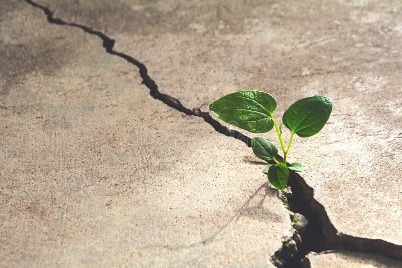 Grüne Jungpflanze, die auf dem Zementboden wächst lizenzfreie stockfotos