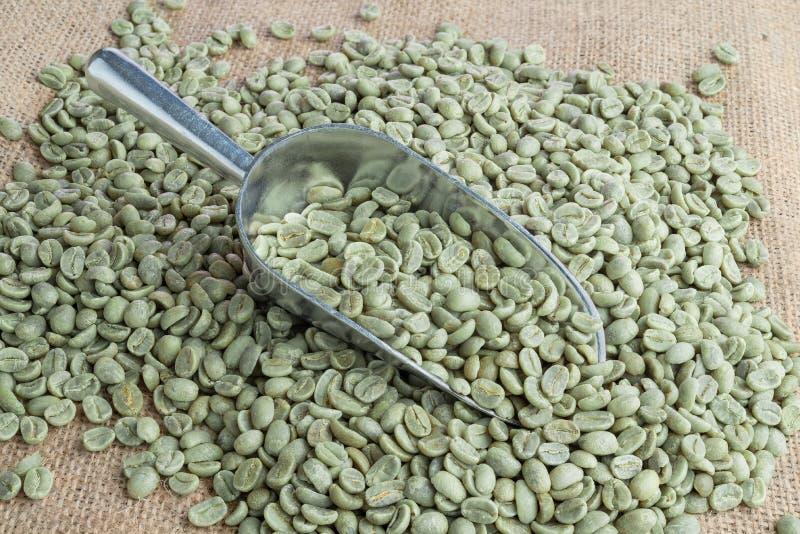 Grüne Kaffeebohnen stockfotografie