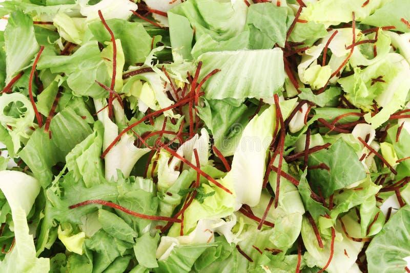 Grüne Kopfsalatblätter lizenzfreie stockfotografie