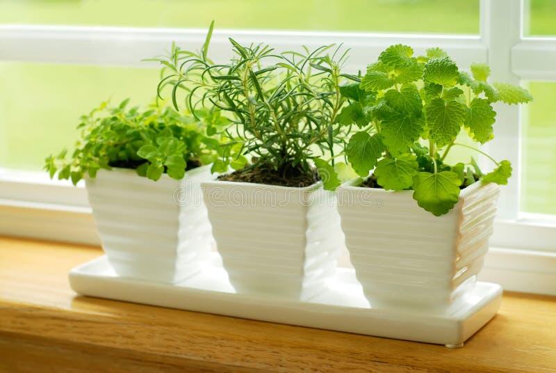 Grüne Kräuter auf einem Fensterrahmen stockfotos
