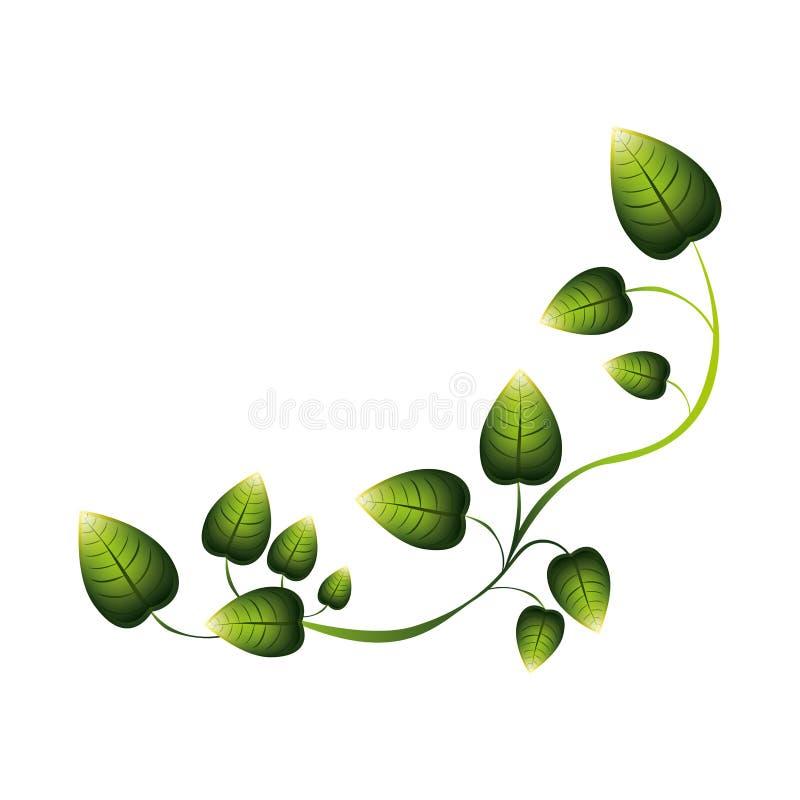 grüne Kriechpflanze mit mehrfachen Blättern vektor abbildung