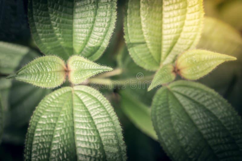 Grüne leavess an der Sonnenaufgangfrühlingsnatur tapezieren Hintergrund lizenzfreie stockbilder