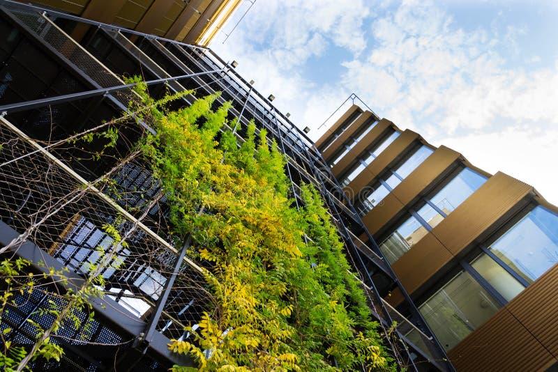 Grüne lebende Wand im Freien, vertikaler Garten auf modernem Bürogebäude lizenzfreie stockbilder