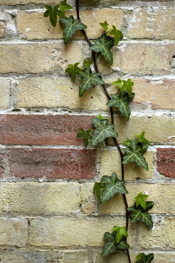 Grüne Lebensdauer auf Ziegelstein stockfotografie