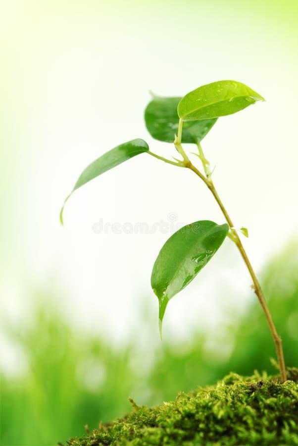 Grüne Lebensdauer in der Natur lizenzfreie stockfotos