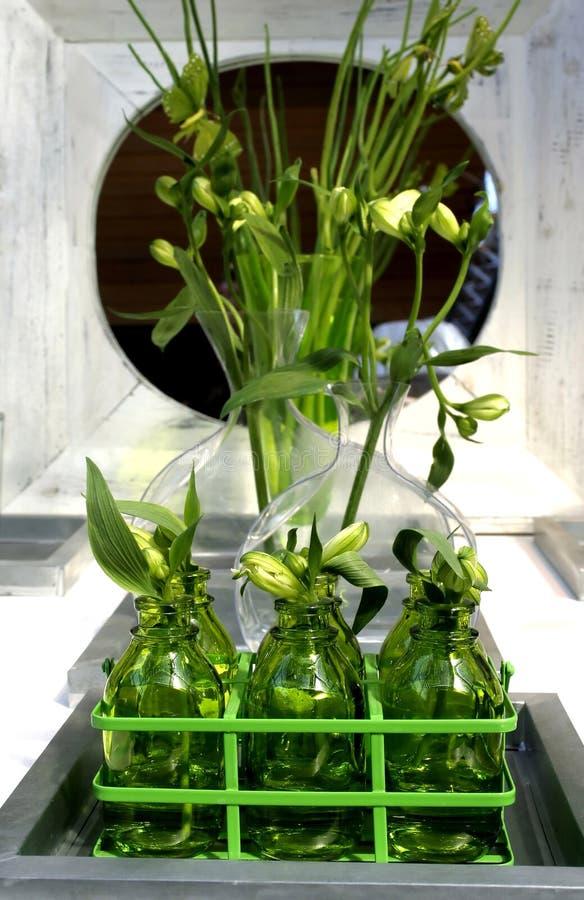 Grüne Lebensdauer im Innenraum lizenzfreies stockbild
