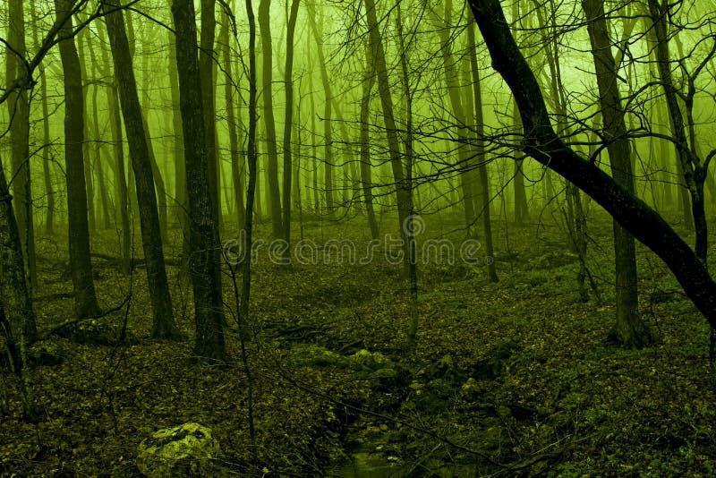 Grüne Leuchte, die durch Waldnebel glüht lizenzfreie stockfotografie