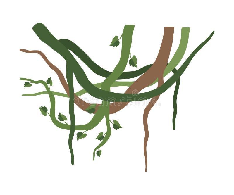 Grüne Liana Branches mit Blättern, Dschungel-Betriebsdekoratives Element, Regenwald Flora Vector Illustration stock abbildung