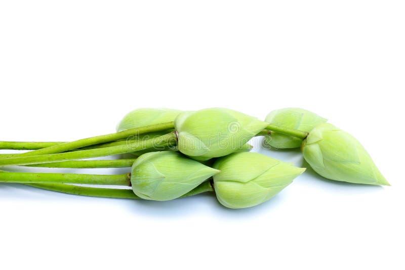 Grüne Lotosblume lokalisiert auf weißem Hintergrund stockbild
