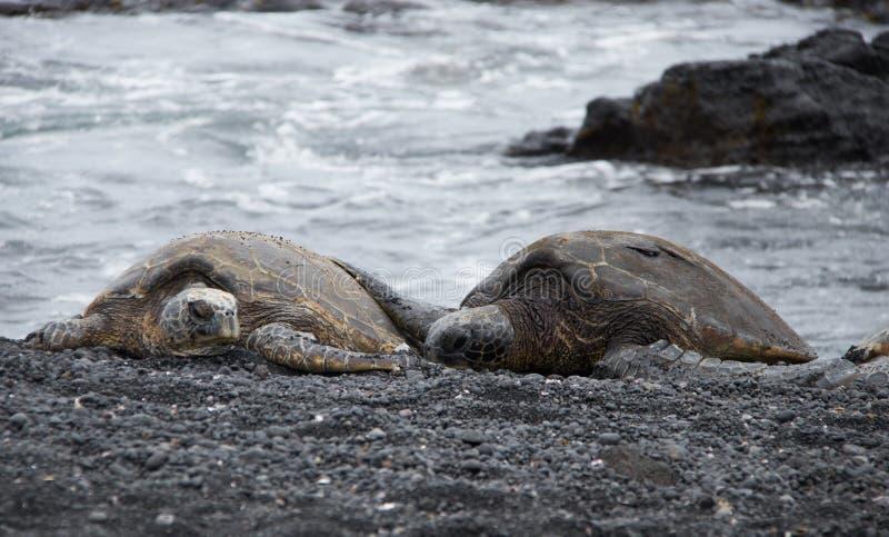Grüne Meeresschildkröten in Hawaii lizenzfreie stockfotos