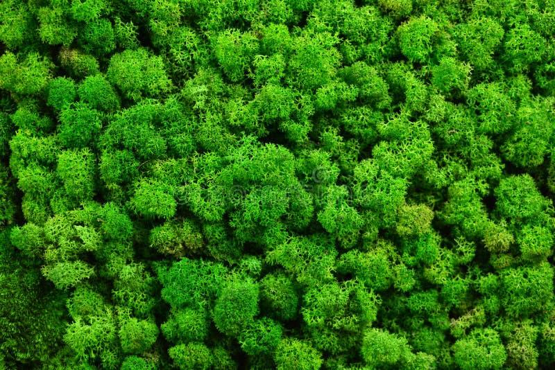 Grüne Moosbeschaffenheit für Ihr Design stockfoto