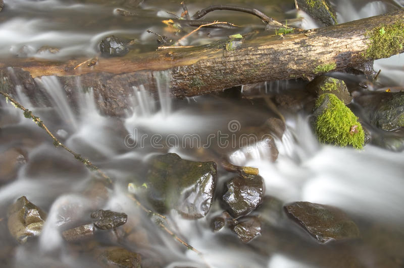 Grüne moosige Farne wachsen Felsen-Wasser-flüssigen Fluss-Strom lizenzfreie stockbilder