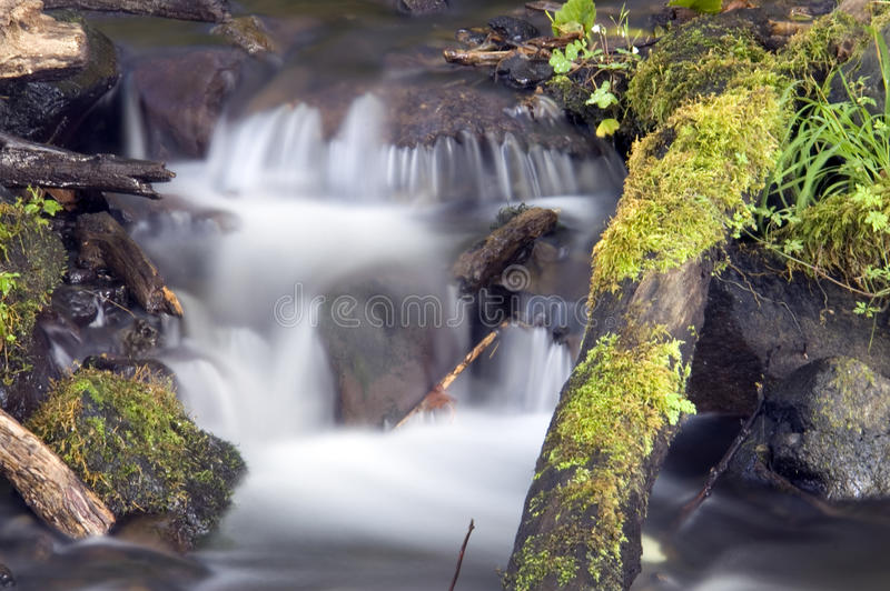Grüne moosige Farne wachsen Felsen-Wasser-flüssigen Fluss-Strom stockfotografie