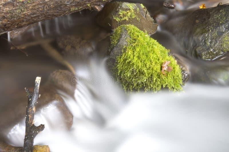 Grüne moosige Farne wachsen Felsen-Wasser-flüssigen Fluss-Strom lizenzfreie stockfotos