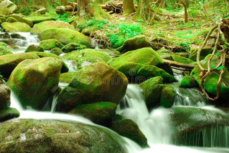 Grüne moosige Felsen mit Wasserfall stockfotos