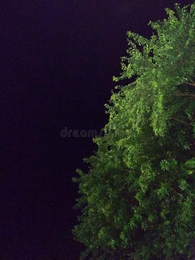 Grüne Nacht stockfotos