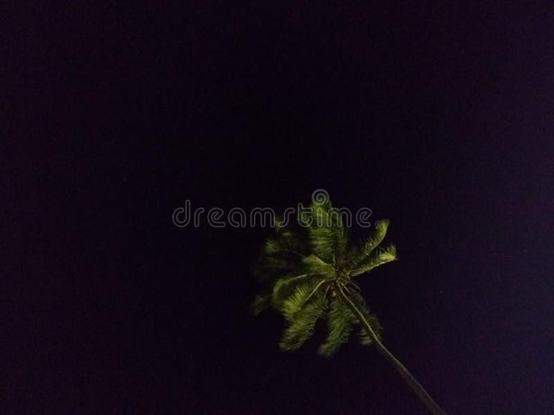 Grüne Nacht lizenzfreie stockfotos