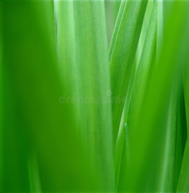 Grüne Natur.